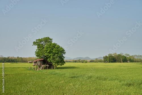 Fotobehang Rijstvelden Hut in rice field