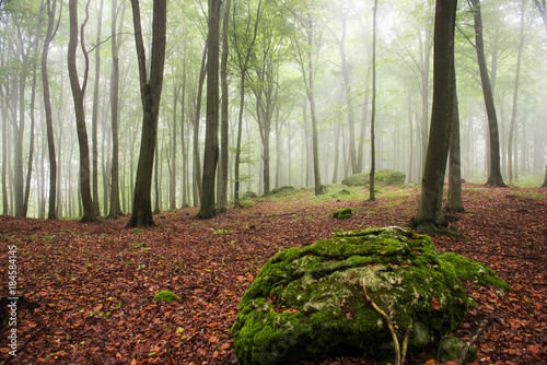 Aluminium Lente Morning in the foggy forest