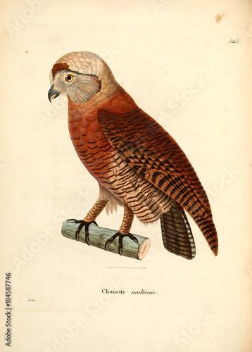 Foto op Aluminium Uilen cartoon Illustration of owl