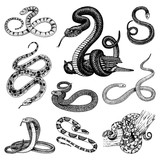 Set Viper Snake. serpent cobra and python, anaconda or viper, royal. engraved hand drawn in old sketch, vintage style for sticker and tattoo. ophidian and asp. - 184588935
