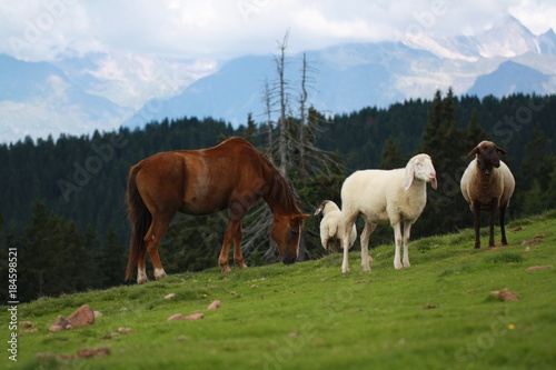 Plexiglas Paarden Bergweide mit Pferd und Schafen