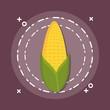 sweet golden corn