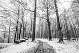 Winter scenery of a forest covered in snow - 184608353