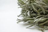 The dry grass of the sage on a white background looks from the side. Salvia officinalis. - 184617325
