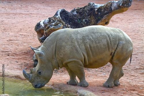 Fotobehang Neushoorn Rinoceronte Rhino Rhinoceros