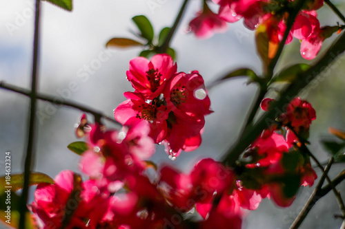 A sweet spring flower on a tree