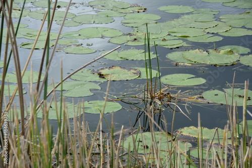 Plexiglas Olijf marsh