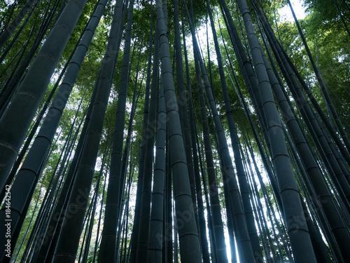 Plexiglas Bamboe 竹林