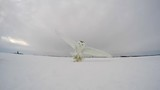 snowy owl amazing angle of hunting mouse right over go pro camera 120fps