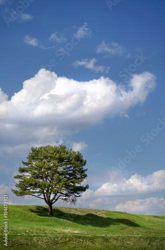 Aluminium Lente Hill with trees