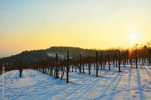 Fotobehang Zwavel geel Winter vineyard landscape