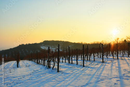 Aluminium Zwavel geel Winter vineyard landscape