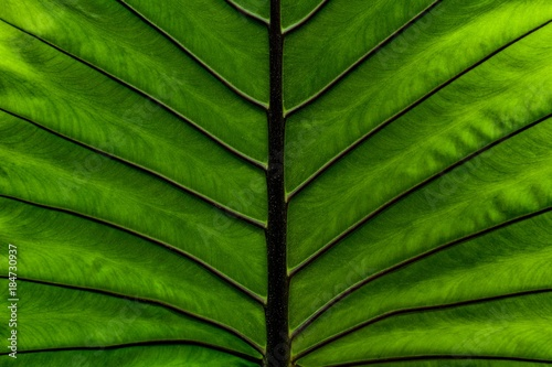 close up green leaf texture - 184730937