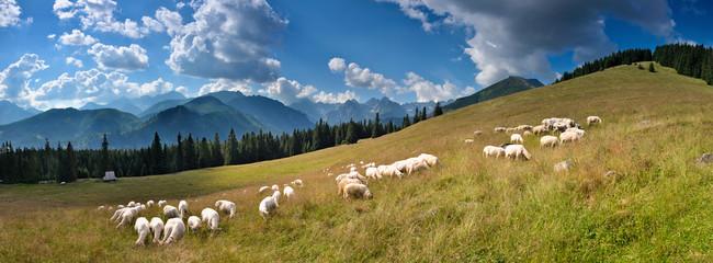 Wypas owiec na Rusinowej Polanie