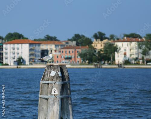 Fotobehang Dolfijn pole to moor the boat the the house of Lido di Venezia in Italy