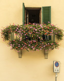 Colorful window box, Greve in Chianti, Tuscany, Italy