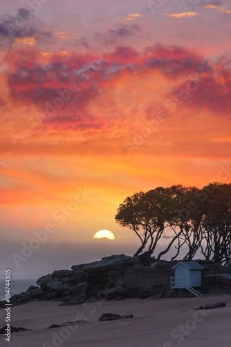 In de dag Oranje eclat solaire