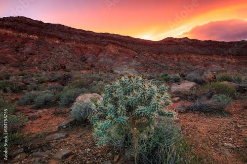 Staande foto Chocoladebruin desert cactus