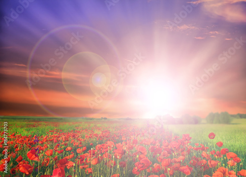 Field of poppies on a sunrise Poster