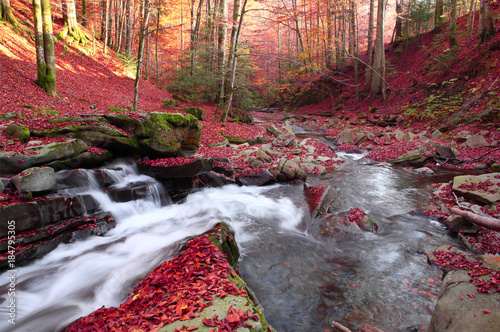 Tuinposter Chocoladebruin Waterfall in the autumn beech forest