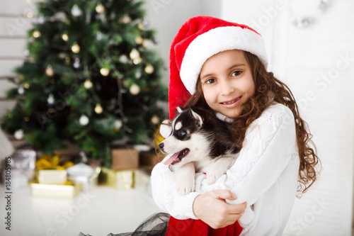Happy Little girl  in a Santa hat and puppy dog at Christmas. Poster