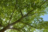 森林イメージ - 184809583
