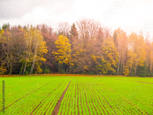 Fotobehang Lime groen Green autumn field of freshly planted winter wheat in a rows.