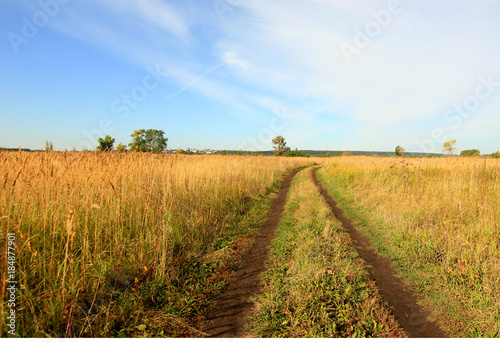 Fotobehang Honing landscape with road in a field with herbs and blue sky