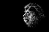 lion in black and white with blue eyes - 184878705