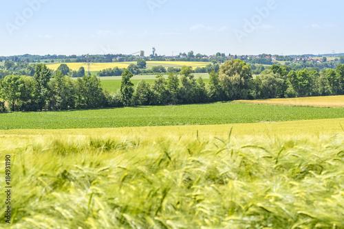 Foto op Aluminium Zwavel geel rural scenery in Hohenlohe