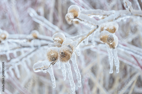 Foto op Aluminium Canada Frozen winter background of icy trees