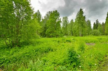 natural landscape in the spring.