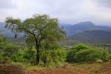 Tsavo National Park in Kenya - 184987302