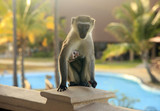 Curious monkey on the balcony of the hotel - 184987705
