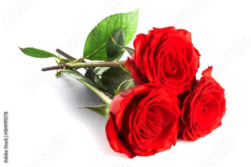 Three roses on white
