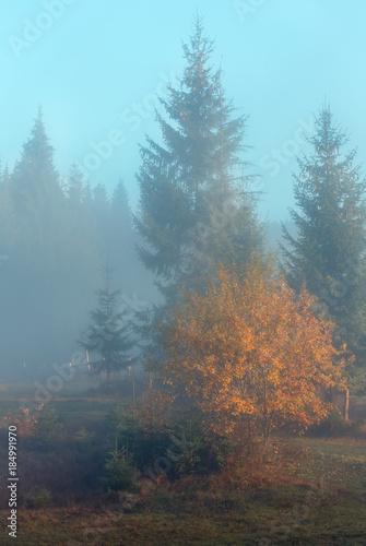 Autumn Carpathians, Ukraine. Poster