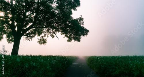 Fototapeta Foggy morning in park with green grass