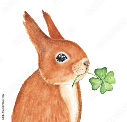 Little fluffy red squirrel character portrait, holding four leaf clover, good luck symbol. Playful shining eyes and success wishes. Hand drawn watercolour ink illustration, isolated, white background. - 185034185