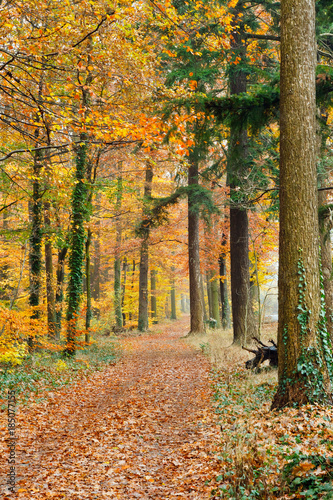 Poster Weg in bos Pathway in the autumn forest, Germany