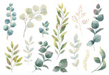 Hand drawn vector watercolor set of herbs, wildflowers and spices. - 185080559