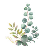 Watercolor vector bouquet with green eucalyptus leaves and branches. - 185080568
