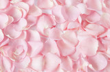 Roses petals background  - 185087793