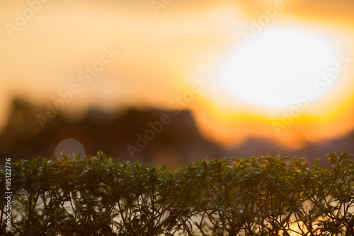 Small bush of tree with golden sun ray in the evening Poster
