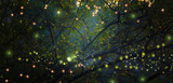 Fototapety Abstract and magical image of Firefly flying in the night forest. Fairy tale concept.
