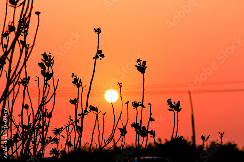 Foto op Plexiglas Koraal sunset with tree silhoeutte