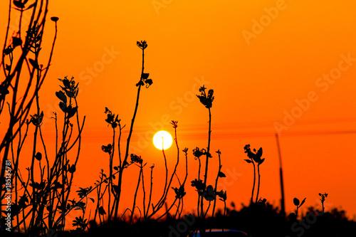 Fotobehang Oranje eclat sunset with tree silhoeutte