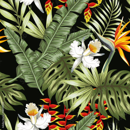 Jungle flowers and leaves black background - 185138190