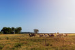 Horses in a ranch with an old barn in the background in rural Texas at sunset, USA; Concept for travel in the USA and in Texas