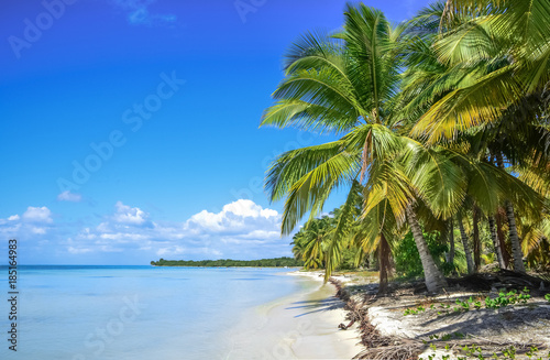 Fotobehang Tropical strand palm and beach