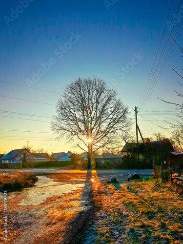Winter morning sun shines through the bare tree among town Poster